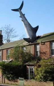 photo of shark in roof